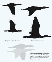 kormoran-zwergscharbe2_0