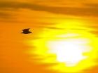 Möwe vor der untergehenden Sonne