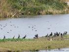 Gemischte Gesellschaft, Marinetta / Mixed flock at Marinetta