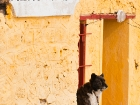 Wachhund / Guard dog