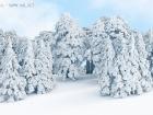 Verschneiter Zedernwald / Snowy cedar forest