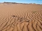 Wüste nahe Erfoud / Desert near Erfoud